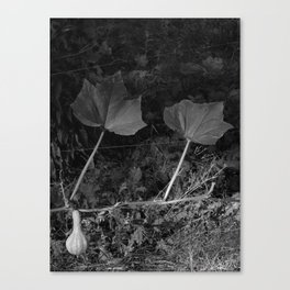 Leaves in the Garden of a Couple I knew Canvas Print