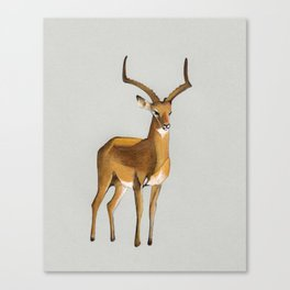 Money antelope Canvas Print