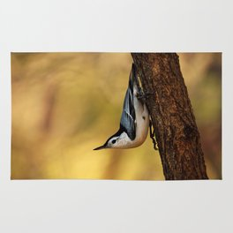 White-breasted nuthatch Rug