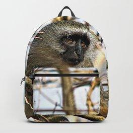 Cute Velvet Monkey on Tree Backpack