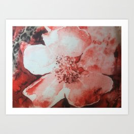red and white flower Art Print
