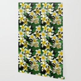 Plumeria Flowers Wallpaper
