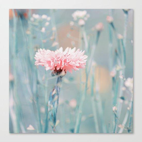 Pink pastel cornflower Canvas Print