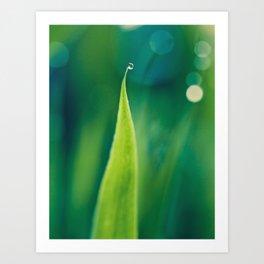grass and bokeh Art Print
