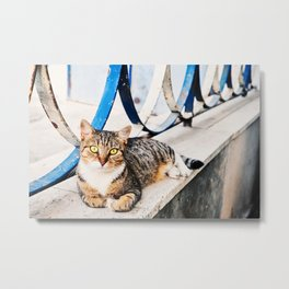 Sorrento Gatto  Metal Print
