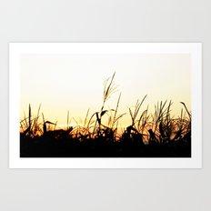 Maizal Art Print
