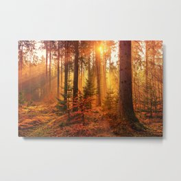 The Golden Hour (Color) Metal Print