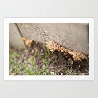 Fungi Art Print