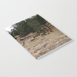 Colorado, wildlife Notebook