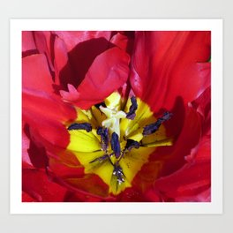 Centre of a Tulip Art Print