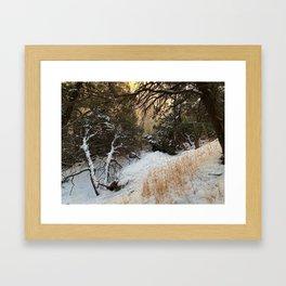 Carson Forest  Framed Art Print