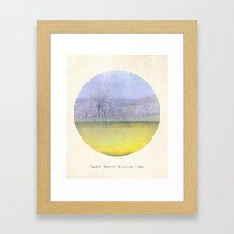 Sweet Cherry Blossom Time Framed Art Print