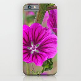 Two Purple Mallow Flowers iPhone Case