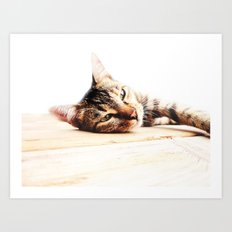 Cats Love Art Print