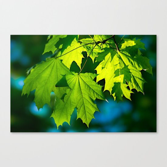 Tales From The Maple Wood Canvas Print
