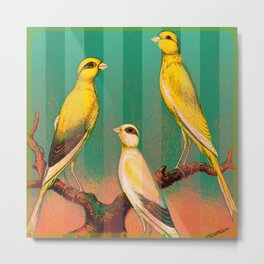 Canaries with Green Stripes Metal Print