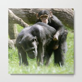 Hitching a Ride Metal Print