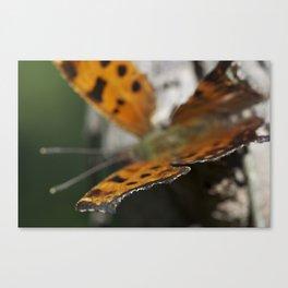 Crisp Wing Canvas Print