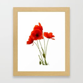 Delicate Red Poppies Vector Framed Art Print