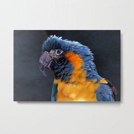 Blue-throated Macaw Profile Metal Print