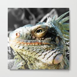 Watercolor Lizard, Green Iguana 01, St John, USVI, His Majesty Metal Print