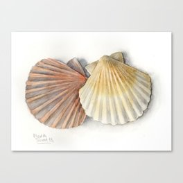 Shells, watercolour Canvas Print