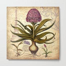 Pink Hyacinth & French Ephemera Collage Print - Vintage Botanical Art Metal Print