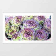Purple Cactus Pedals Art Print