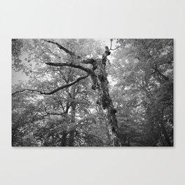 Menacing Forest Canvas Print