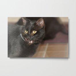 lazer kitty eyes Metal Print