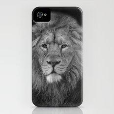 Asiatic Lion iPhone (4, 4s) Slim Case