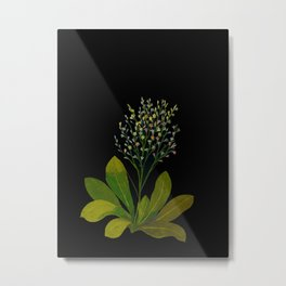 Mary Delany Botanical Vintage Floral Flower Collage Statice Limonium Metal Print