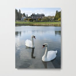 Swans on the lake, with Lynford Hall beyond. Lynford Lakes, Norfolk, UK Metal Print