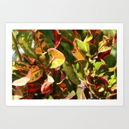 Croton Vibrancy Art Print