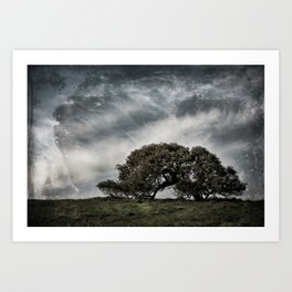 The Lone Oak Art Print