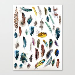 The big Feathers collection : Art Canvas Print