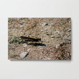 Cricket Closeup Metal Print