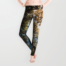 Trees and sky in sunlight- forest landscape - nature photography Leggings