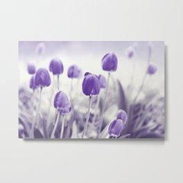Tulips in spring 282 Metal Print
