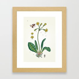 yellow cowslip and bee Framed Art Print