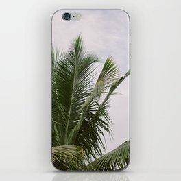 Palms II iPhone Skin