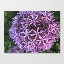 In my small world Canvas Print
