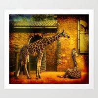 giraffes Art Prints featuring Giraffes by LudaNayvelt