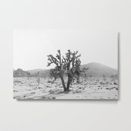 Joshua Trees in the Mojave Desert Metal Print