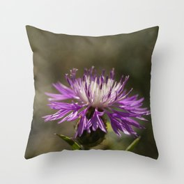Centaurea alba Throw Pillow