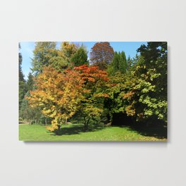 Autumn In The Arboretum Metal Print