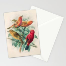 Songbirds Stationery Cards