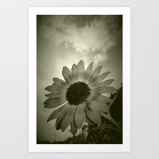 Tired Sunflower Art Print