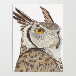 Quintus the Owl Poster