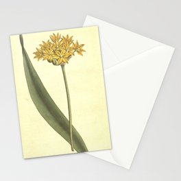 Flower 499 allium moly Yellow Garlic or Moly19 Stationery Cards